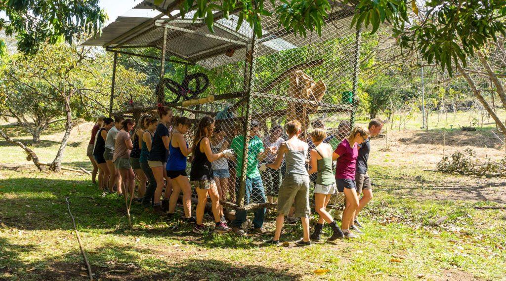 Freiwilligenarbeit in Costa Rica – diese Tiere brauchen deine Hilfe