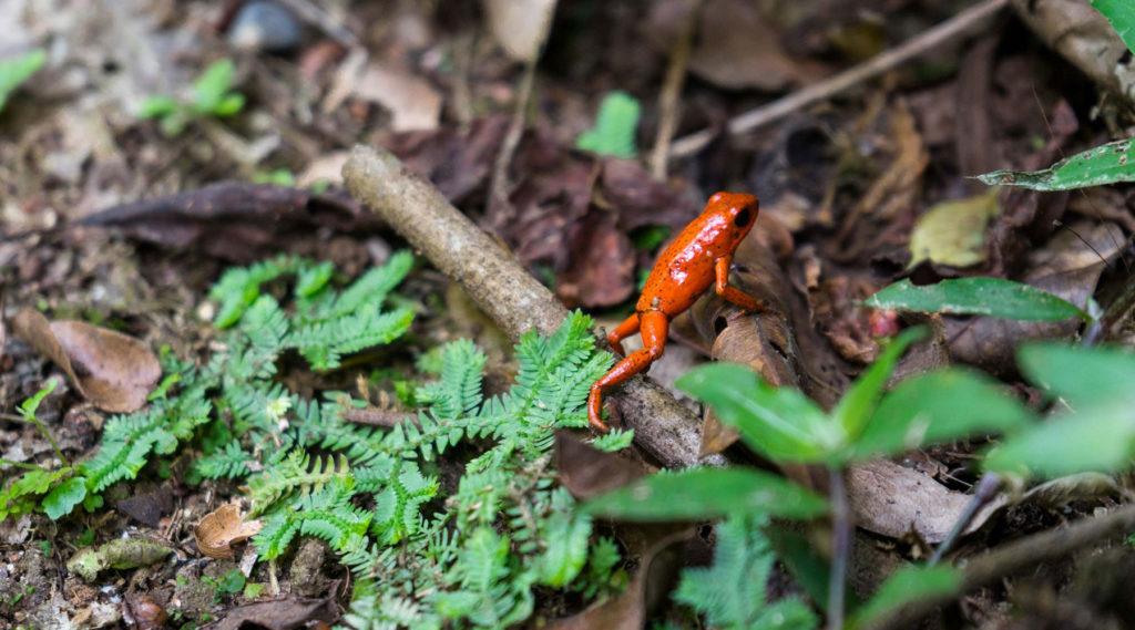 Nationalparks und Naturschutzgebiete in Costa Rica