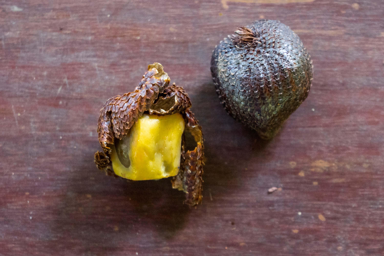 Costa Rica Früchte